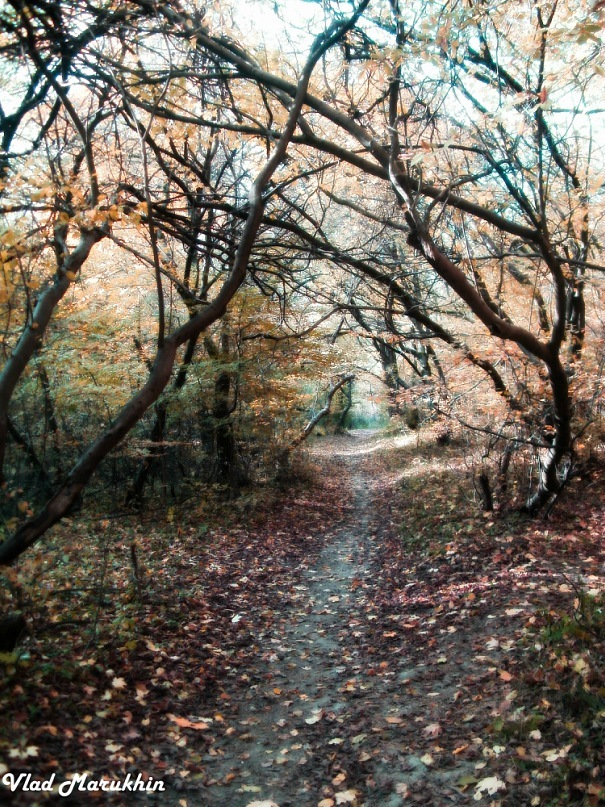 Nature again by Vladonator