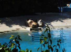 Sea Lions Sunbathing by iluvhorsez-25