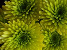 Flower: 7 by AnnaDearestx