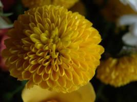 Flower: 8 by AnnaDearestx