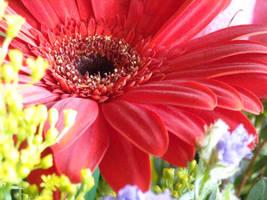 Flower: 9 by AnnaDearestx
