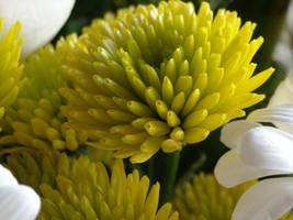 Flower: 10 by AnnaDearestx