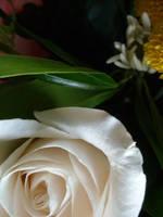 Flower: 11 by AnnaDearestx