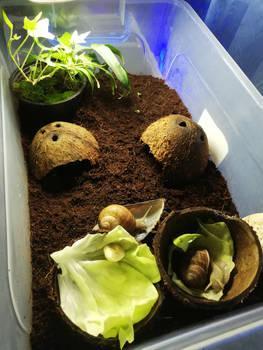 Snail Enclosure