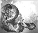 Agaard and the large snake