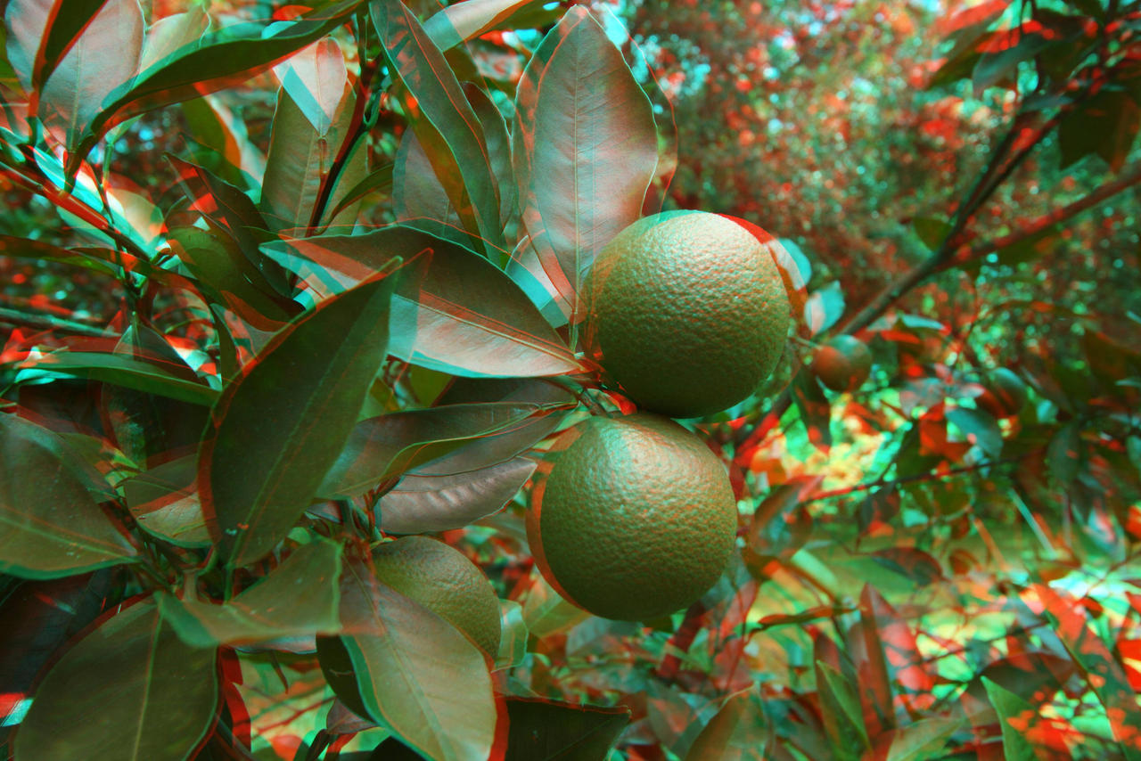 3D Oranges