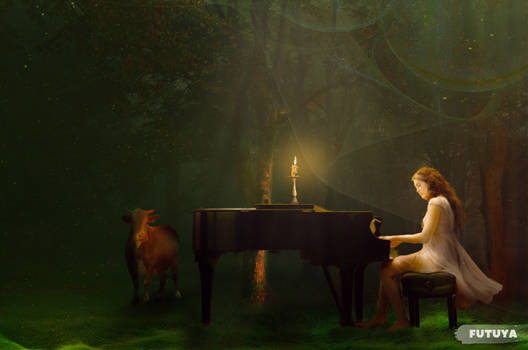 Melody in Forest