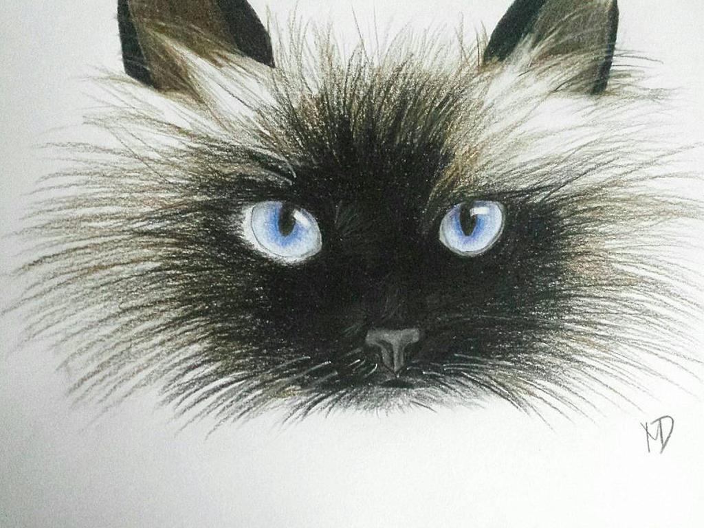 eartha kitt cat woman