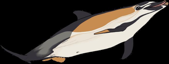 Common Dolphin by Tektalox