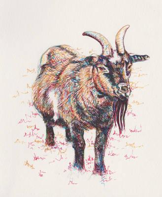 Inky goat by Miandelam