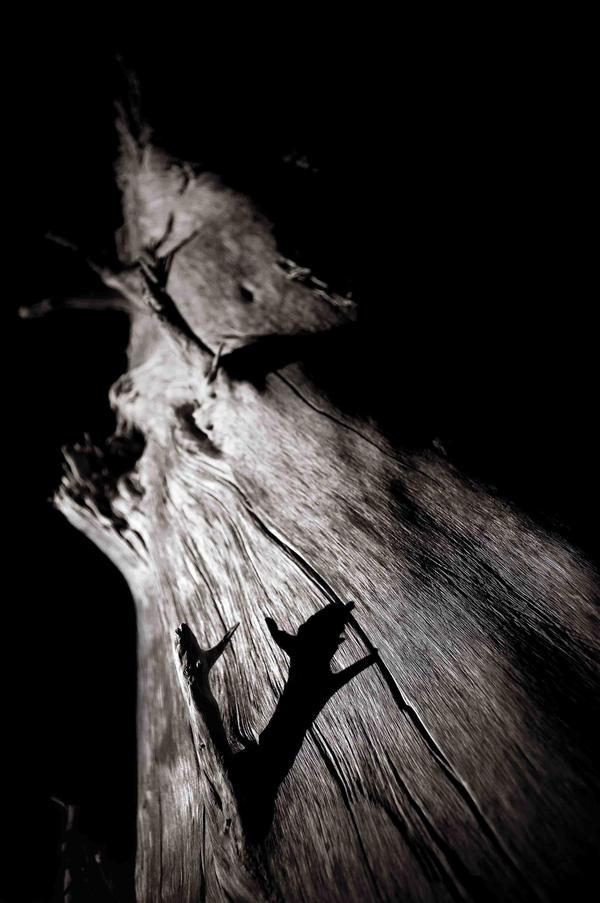 Bones, starved of flesh VII by d3b-ph