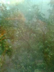 Hurricane in Kharkov. 04.07.2011