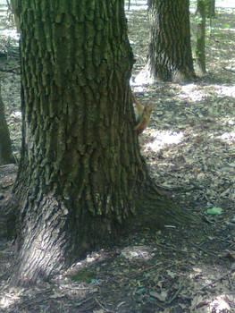 Squirrel - 1
