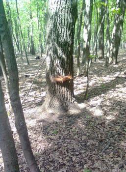 Squirrel - 2
