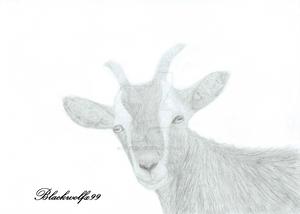 Goat-Tastic by Blackwolfx99