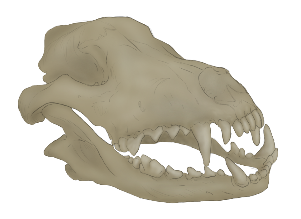 Reborn (Blackwolfx99)