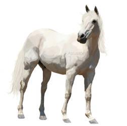 Grey horse by Astusapes