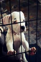 Puppy by hot-hot-heat
