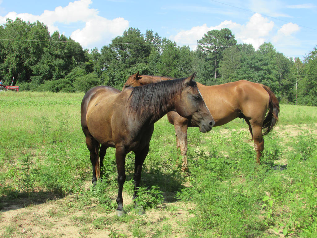 Horse Stock --- Black Mare by ComatosePrincess