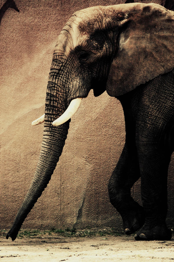 The elephant walk by Interna