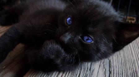 Blue Eyes by Tw1stedMetalPirate
