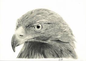 Golden Eagle by Gough83