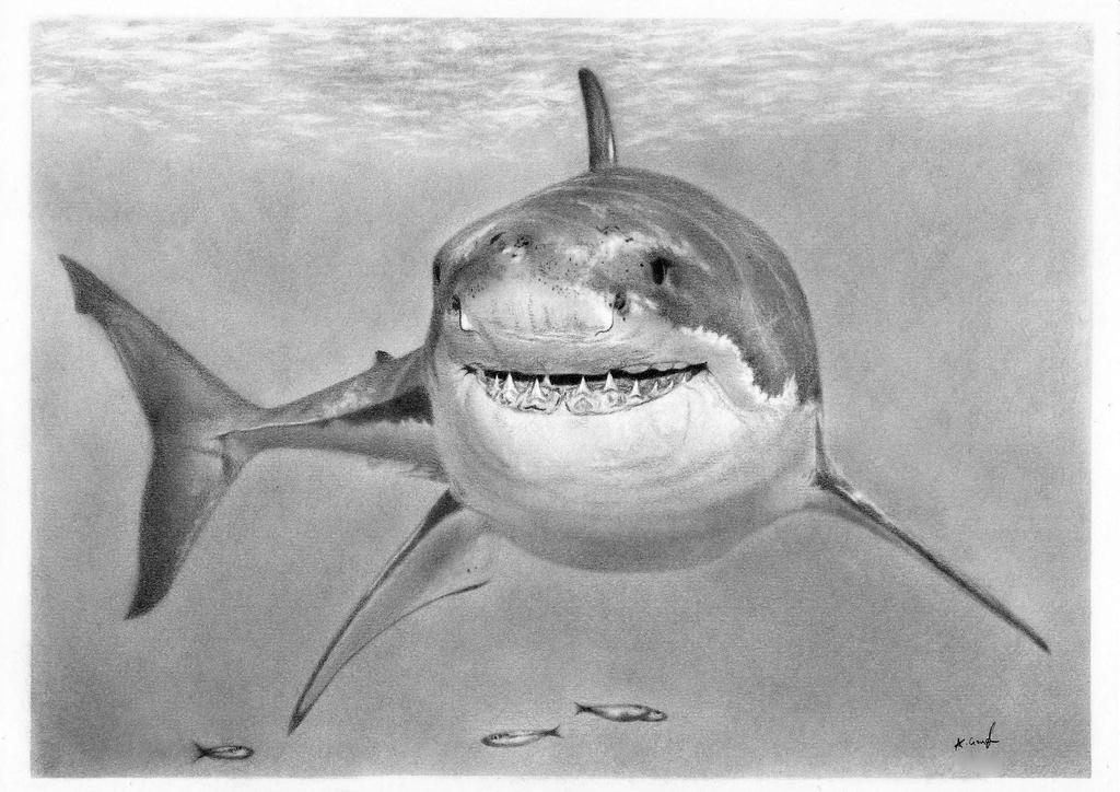 Great White Shark Drawing Great White shark by Gough83