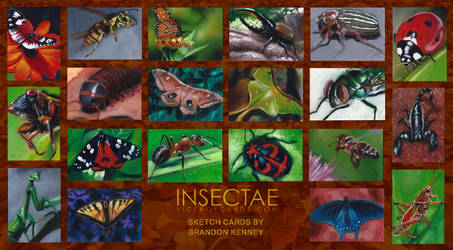 Insectae by Ethrendil