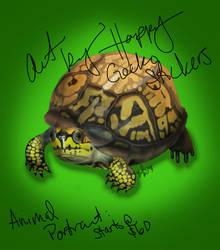 Star's Box Turtle by beachgecko