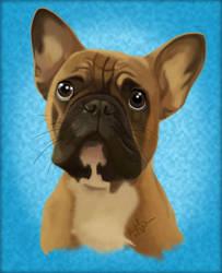 Boston Terrier Beauty by beachgecko