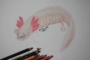 Daisy the Axolotl by beachgecko