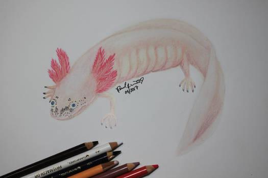 Daisy the Axolotl