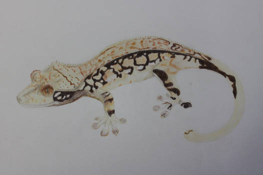 WIP Crested Gecko