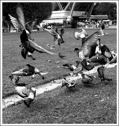 No Paris Without Pigeon by Archangel-Uriel