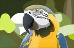 Regal Macaw
