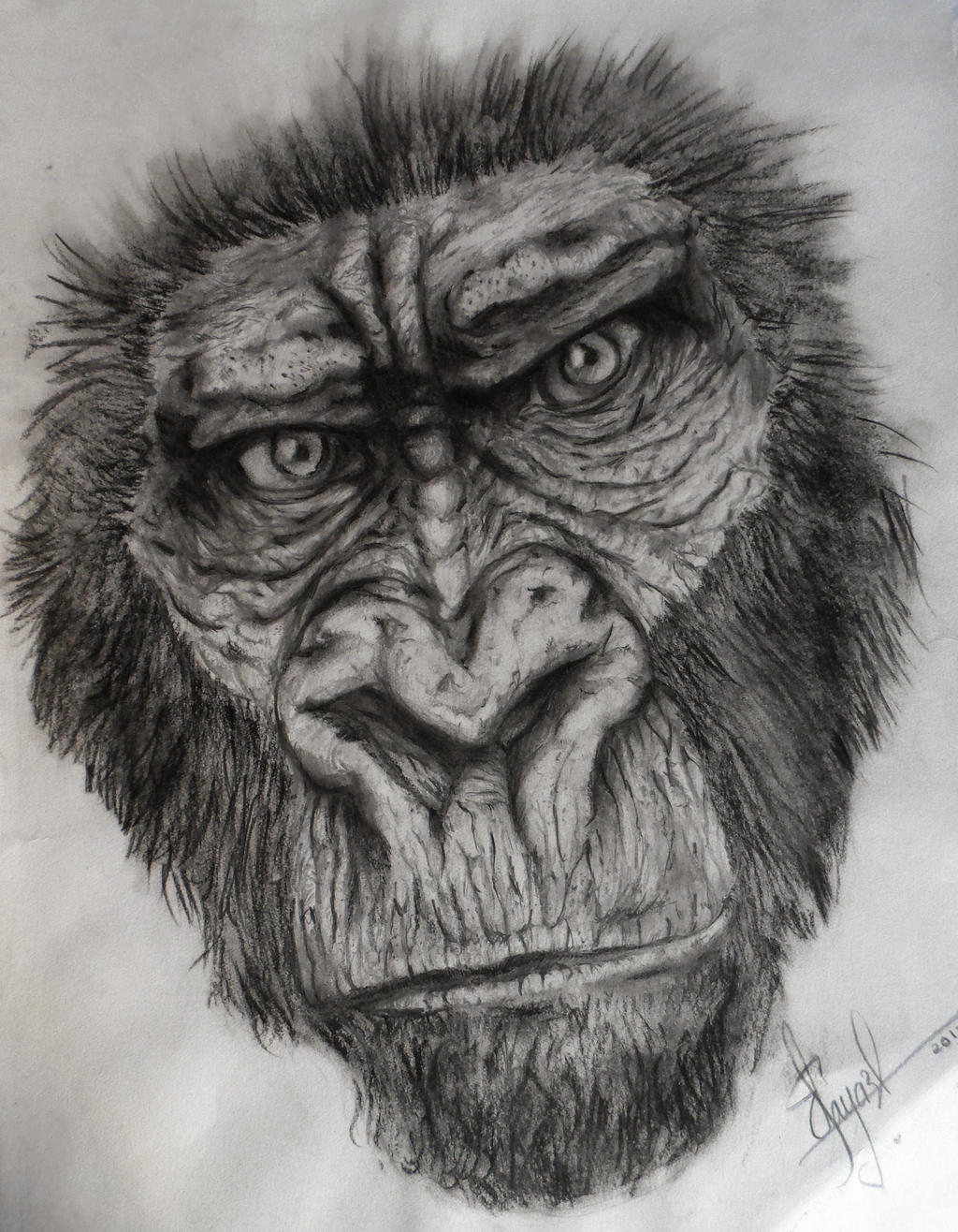 It is a graphic of Irresistible Drawing Of A Gorilla