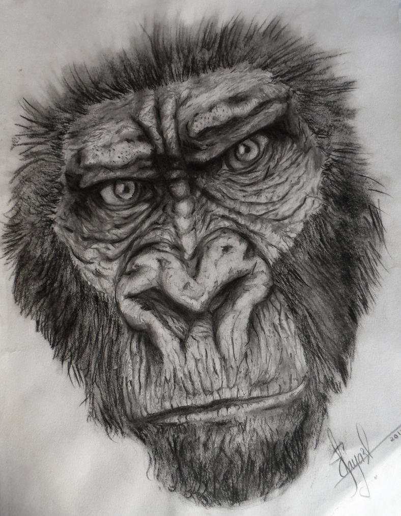 Uncategorized Gorilla Drawings gorilla sketch by dr carrot on deviantart carrot