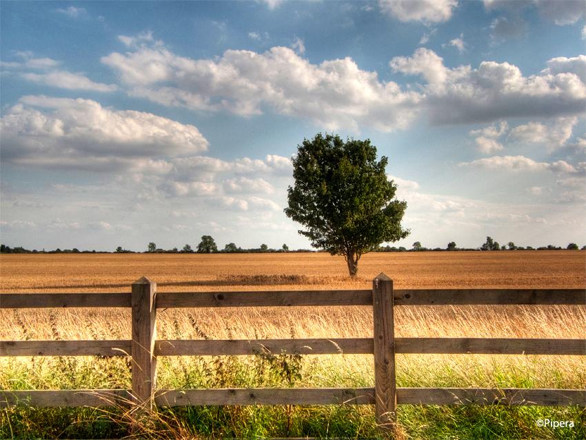 Warm Fields by Pipera