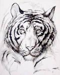 White Tiger by RisingDragonArt