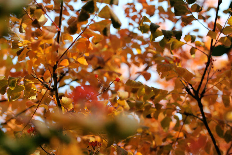 Fall by Morskaya-aka-Umino