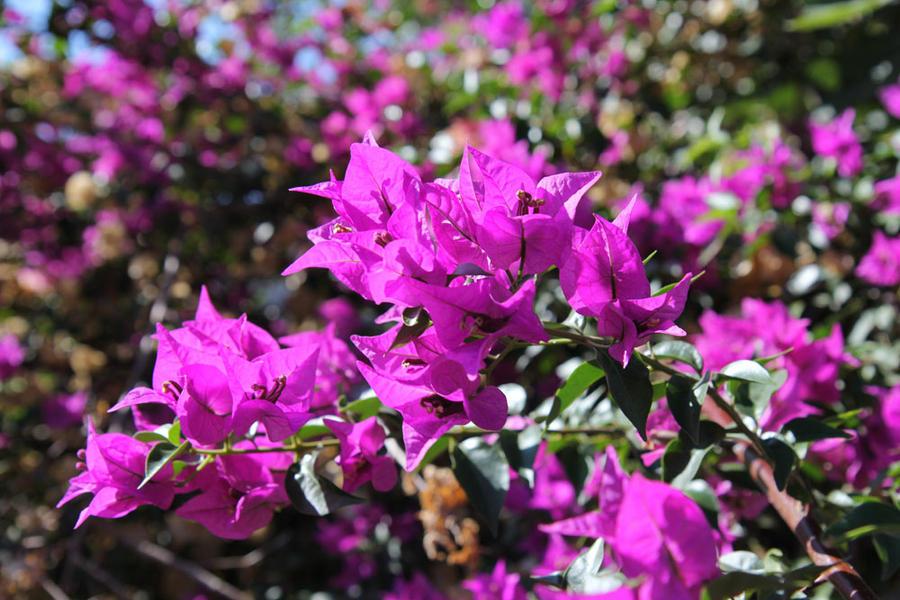 Flowers 14 by Morskaya-aka-Umino