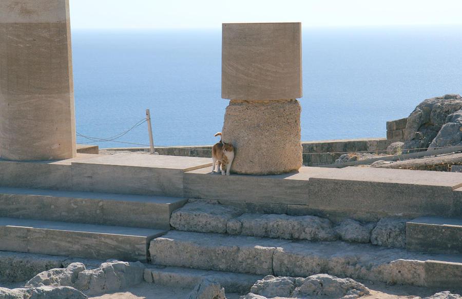 Greek cats 3 by Morskaya-aka-Umino