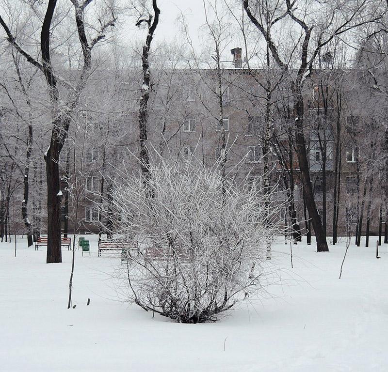 A bush by Morskaya-aka-Umino