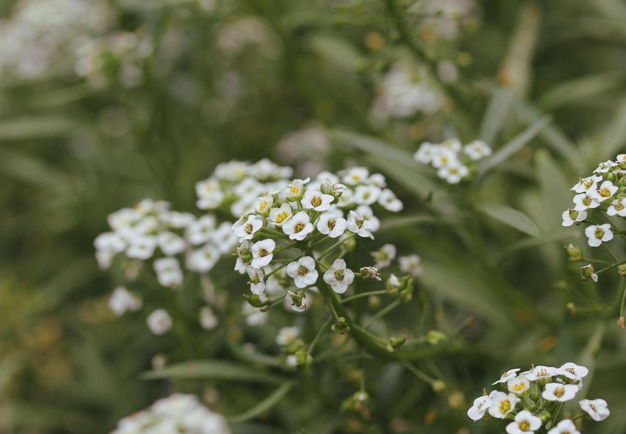 Flowers 16 by Morskaya-aka-Umino