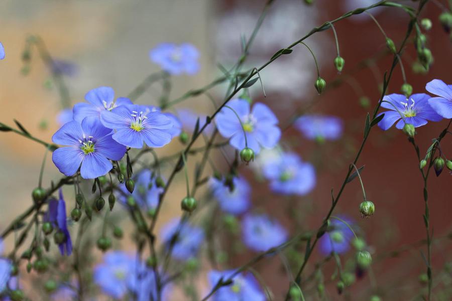Flowers 17 by Morskaya-aka-Umino
