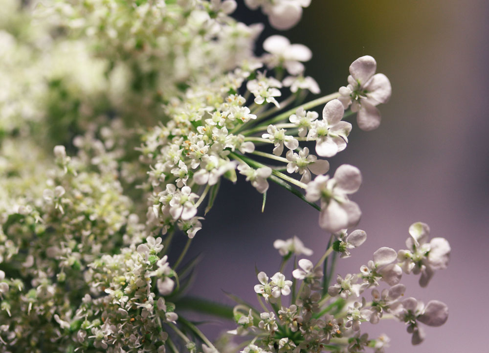 Flowers 19 by Morskaya-aka-Umino