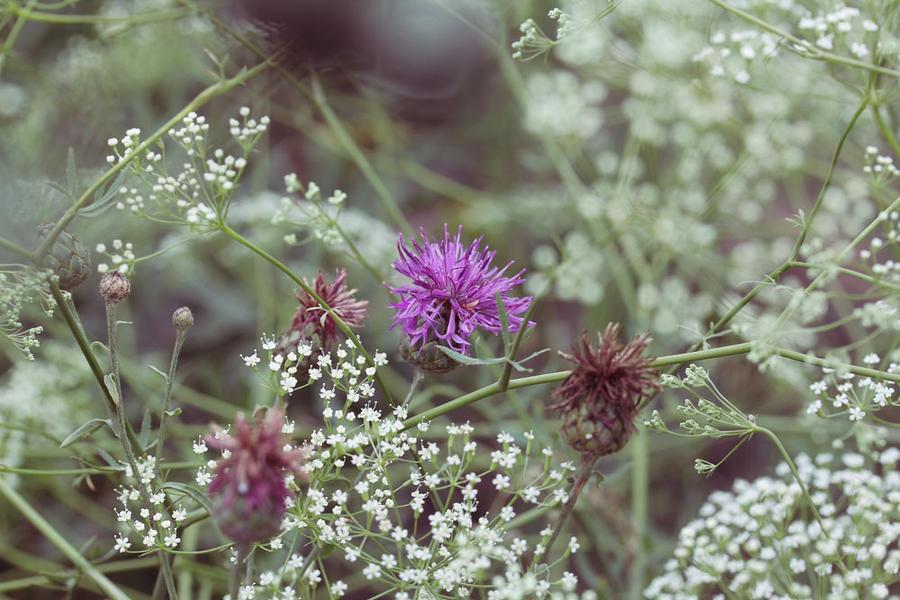 Flowers 20 by Morskaya-aka-Umino