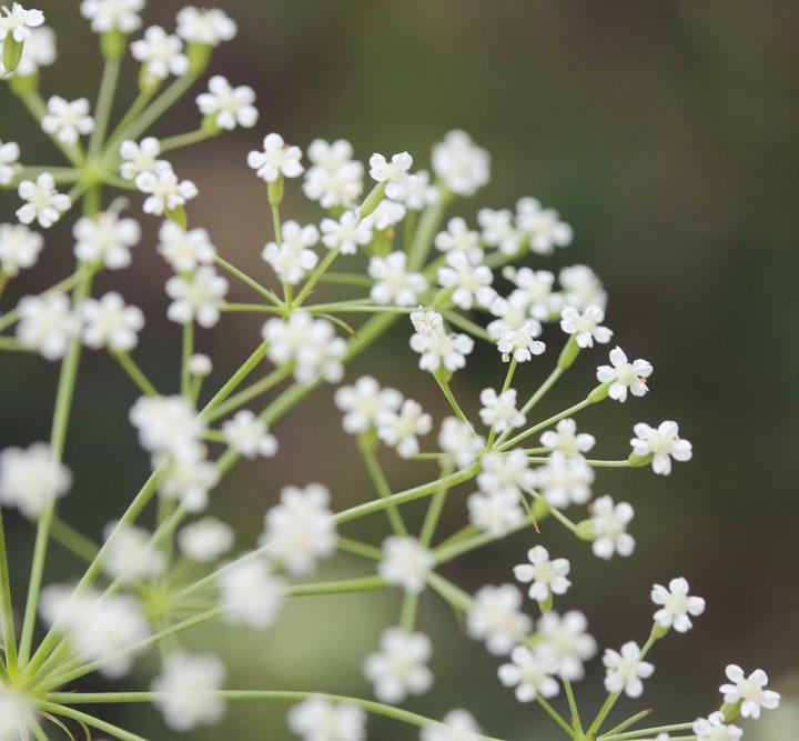 Flowers 21 by Morskaya-aka-Umino