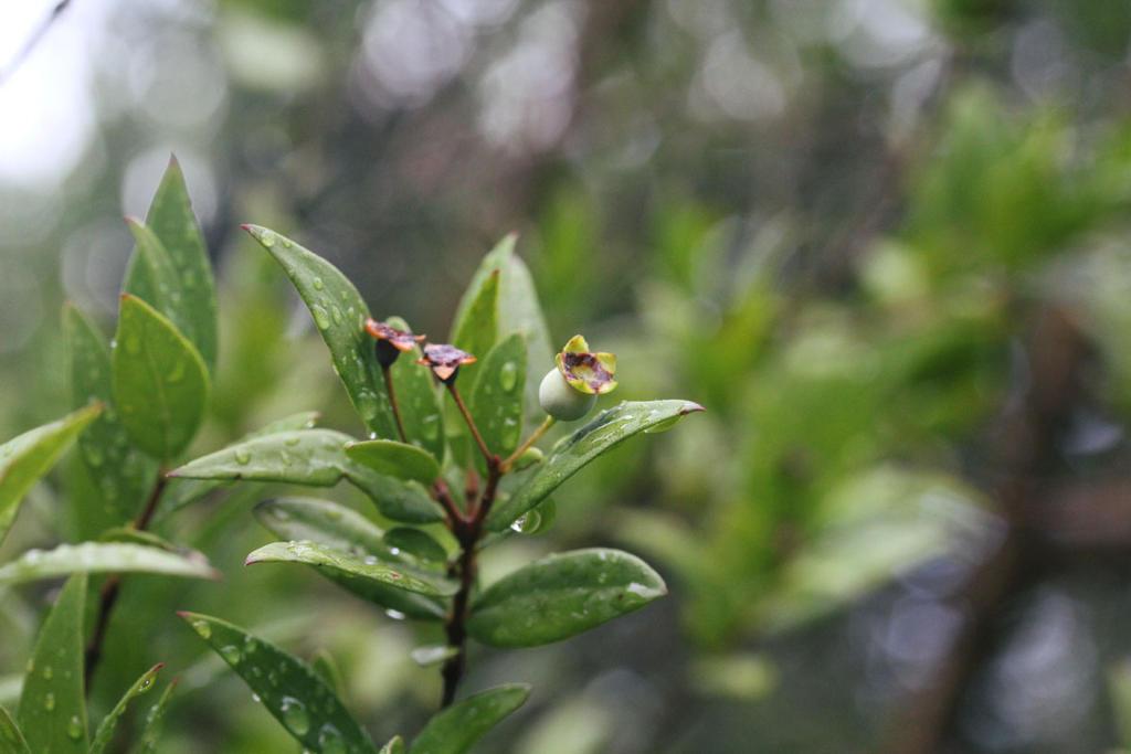 Flowers 22 by Morskaya-aka-Umino