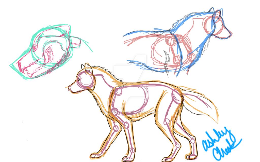 Canine Anatomy Practice by ShroudofShadows on DeviantArt